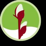 Weidenprofi Weidenzäune