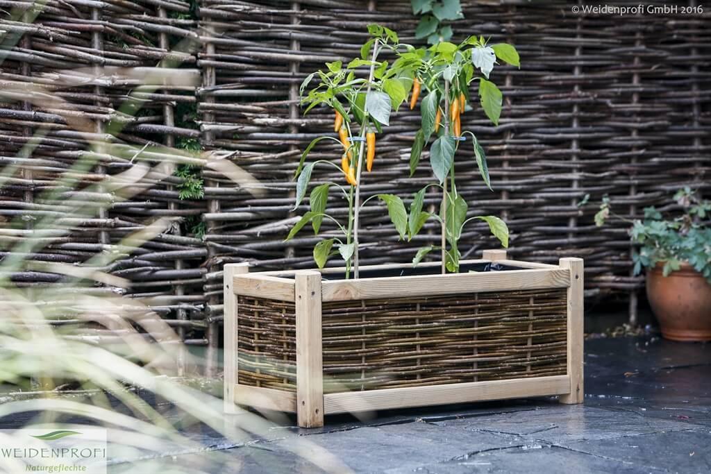 Gartengestaltung Anzucht Pflanzen Weidenprofi Gmbh