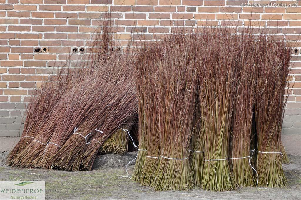 Flechtruten Weide
